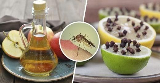 Cover Trucos INFALIBLES para alejar a los mosquitos de tu hogar