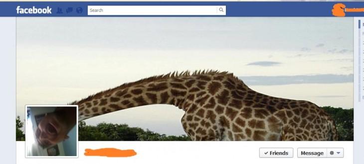 portada de facebook de una jirafa
