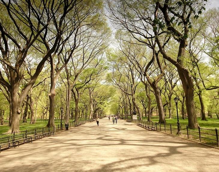 Foto De Central Park En Nueva York