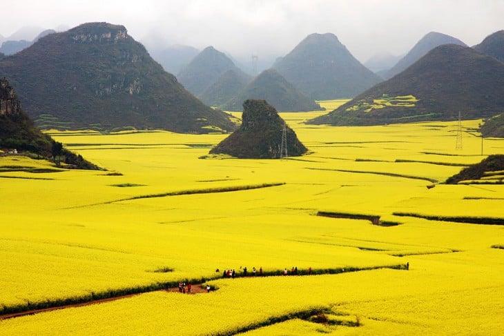 Campos de canola en China