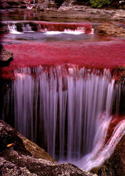 rio caño de cristales colombia