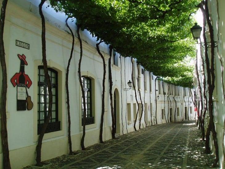Túnel de árboles en una calle en Jerez, España