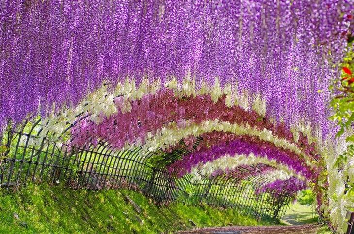 Tunel cubierto de flores en Japón