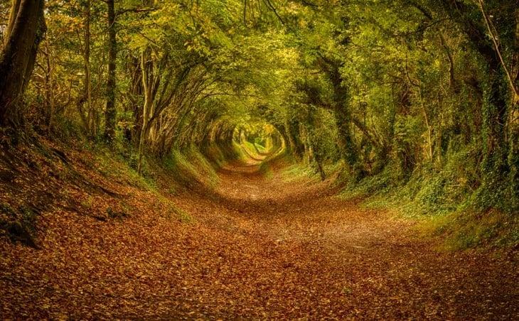 túnel de árboles al sur de Inglaterra