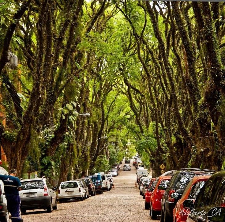 tunel de árboles en Rua Goncalo de Carvalho en brasil