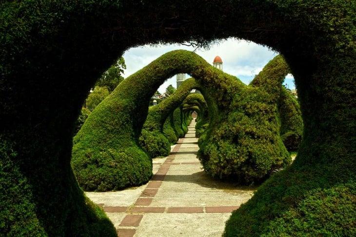 Túnel hecho con árboles en el Parque Fansisco Alvarado en Costa Rica