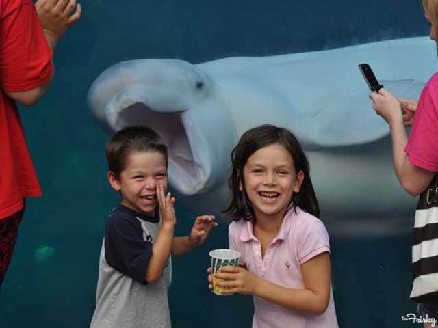 ballena colada en foto