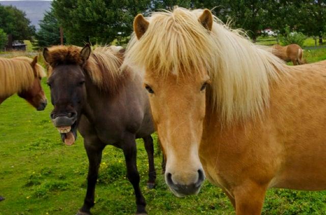 caballo colado en la foto
