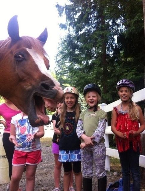 caballo riendose