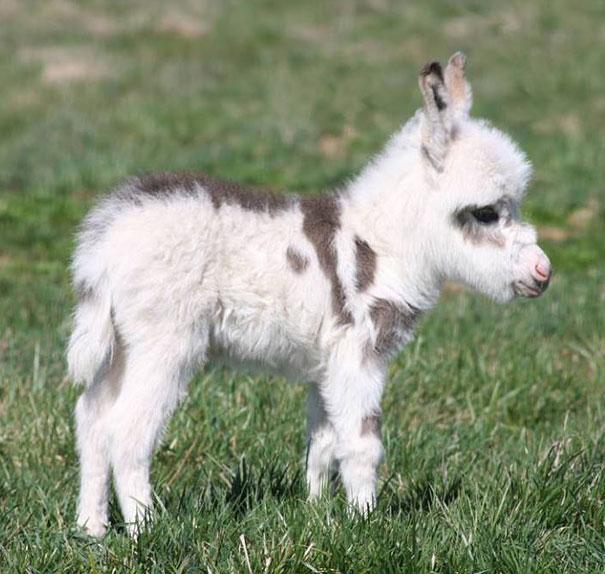 25 Fotos De Animales Bebés