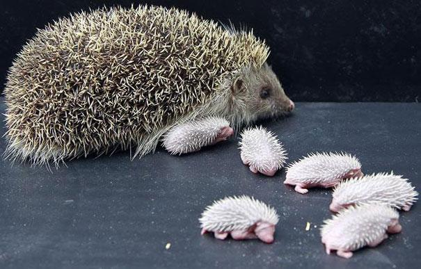 25 fotos de animales bebes que te haran morir de ternura