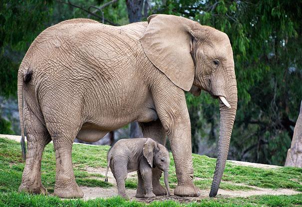 elefantes madre e hijo