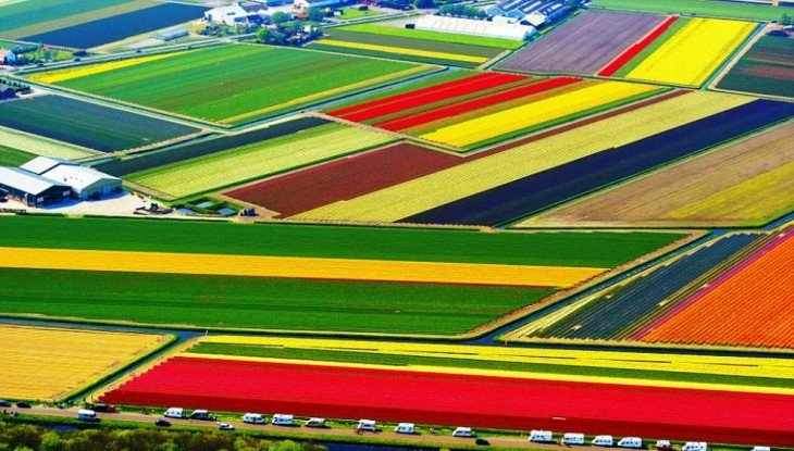 foto aerea de los campos de tulipanes en holanda