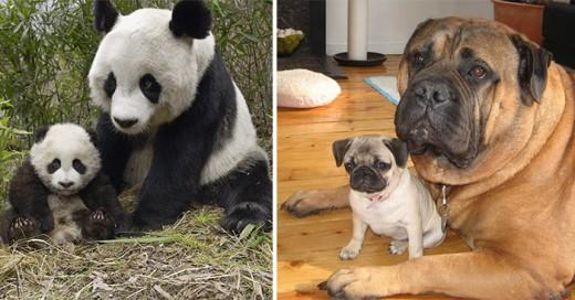 fotos de animales con sus crias bebes