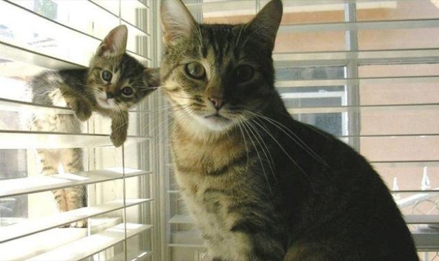 gato hijo colado foto
