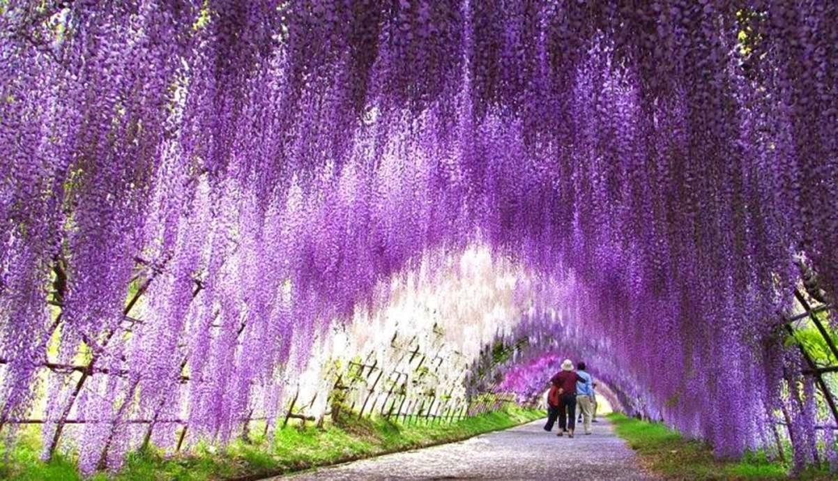 Los 17 t neles de arboles mas hermosos y bellos del mundo for Arboles para jardin japones