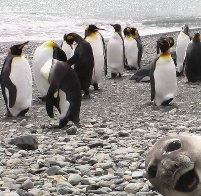 leon marino colado pinguinos