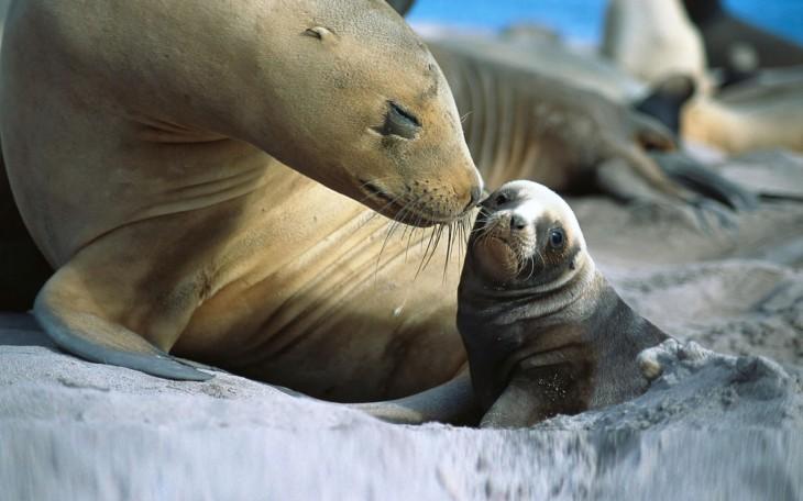 leon marino y su cachorro bebe