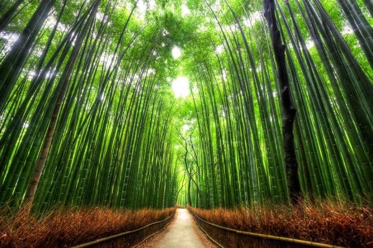 paseo de bambú, kyoto, japón