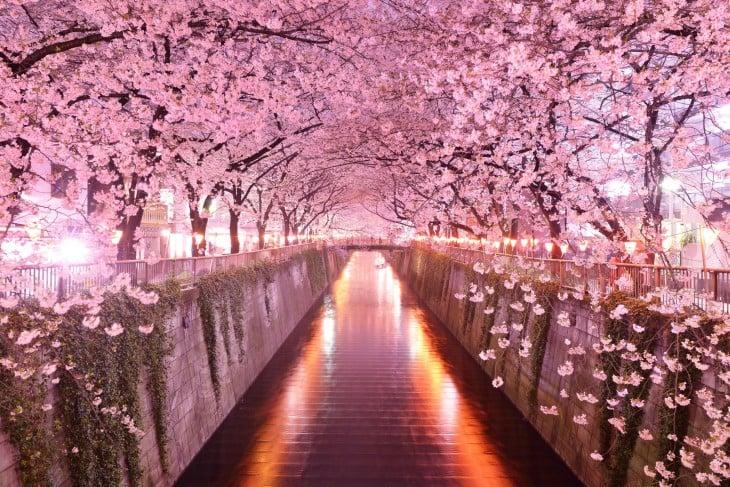 tunel de arboles en sakura japon