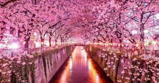 tuneles de arboles maginificos del mundo