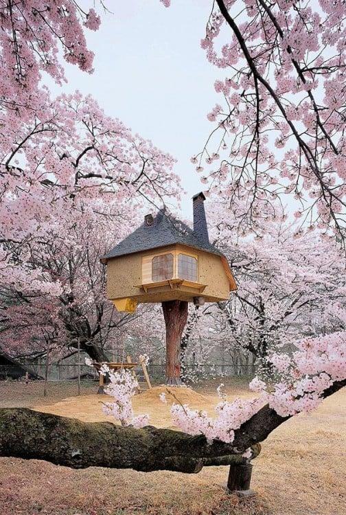 Casa magica del te en japon