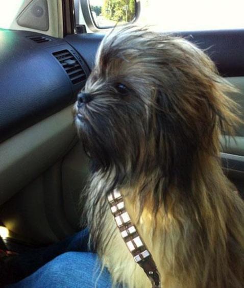 el perro chewbacca