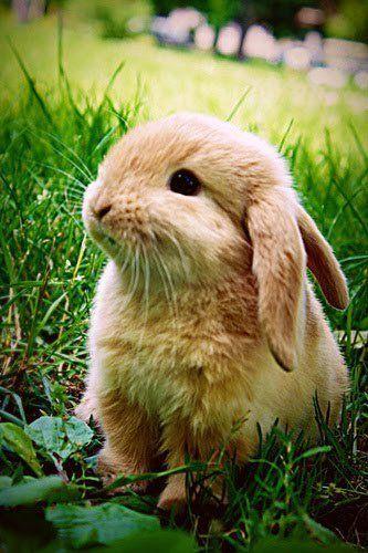 lindo tierno conejito