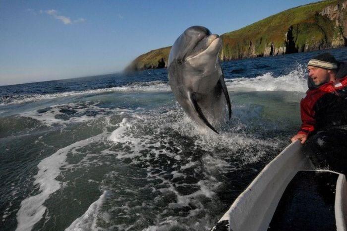 delfin brinca en una foto en el mar