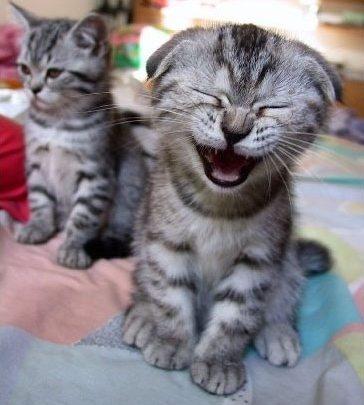 dos gatitos sonriendo