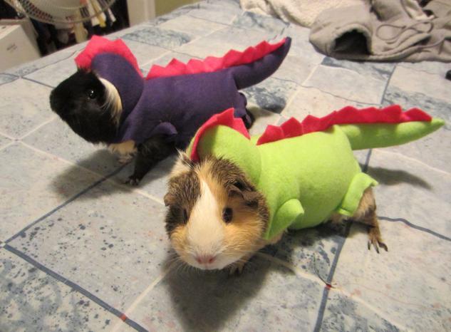 animal disfrazado segun lo que su dueño quiso en el momento