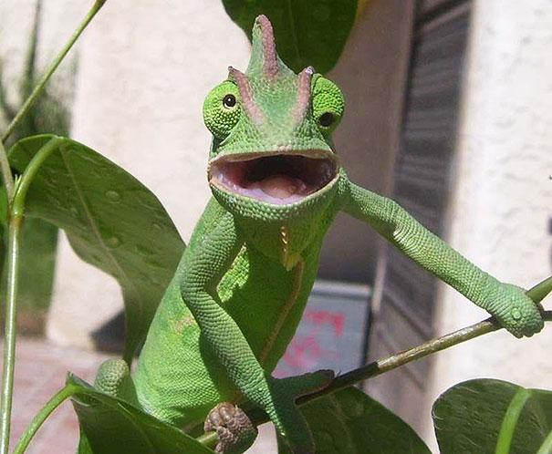 iguana con los ojos para todos lados