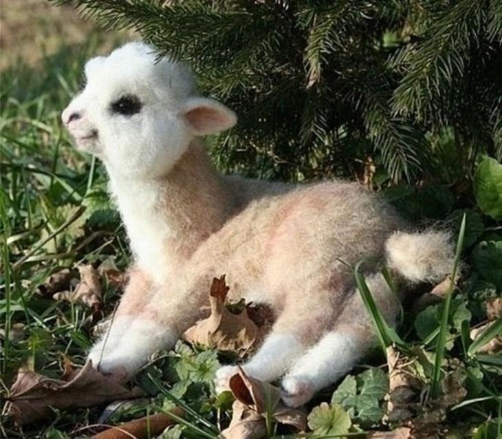 llama bebe ternura