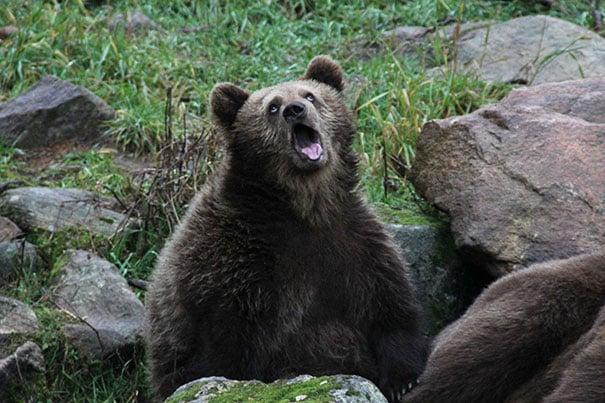 oso pronto para un besito