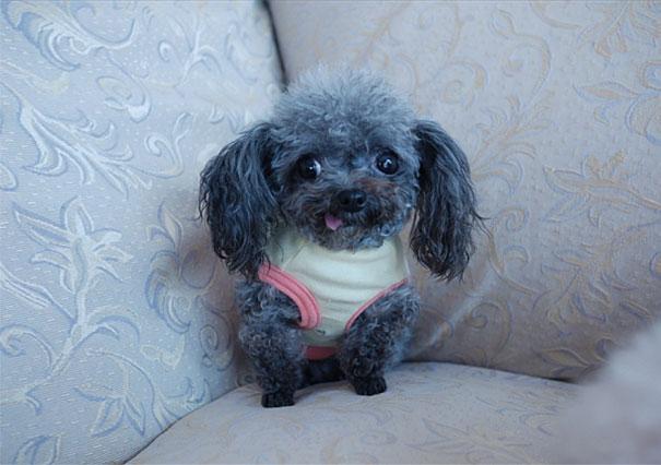perrito pequeño en el sillon