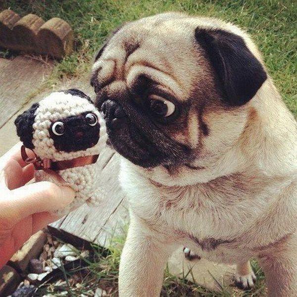 que locura la mirada de esté perro a su mino yo