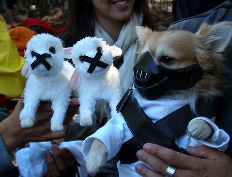 Mira disfraces de halloween para perros