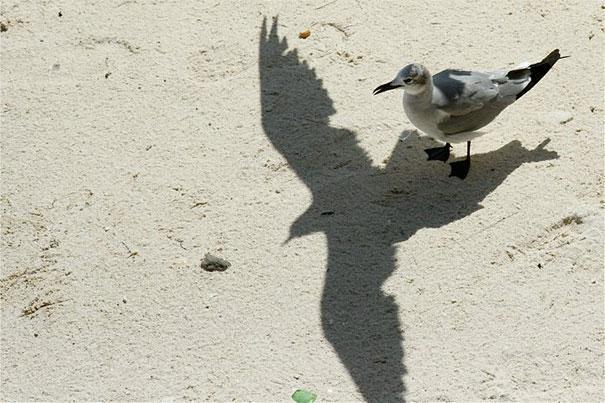 xustaposiscion de sombra y pajaro