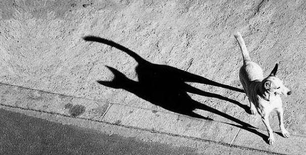 sombra de un lindo gatito