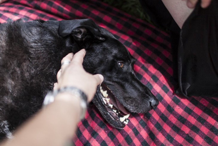 una mano acariciando la cabeza de una perra que esta tirada en el suelo