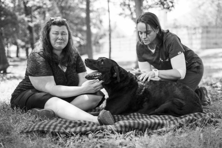 veterinaria inyectando a un perro junto a una mujer llorando en el suelo