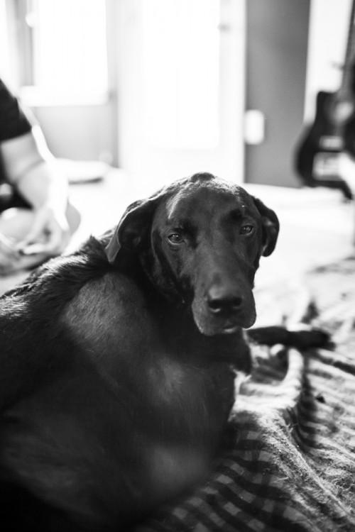 Fotografía a blanco y negro de una perrita en color negro