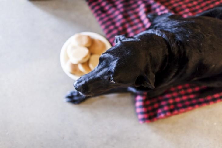 Perro negro acostado sobre una tela con cuadros rojos y negros con un plato de comida en un lado