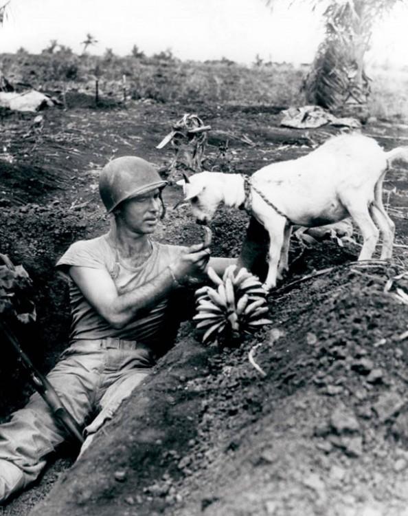 SOLDADO COMPARTIENDO UN PLATANO CON UNA CABRA DURANTE LA GUERRA DE SAPIN 1944