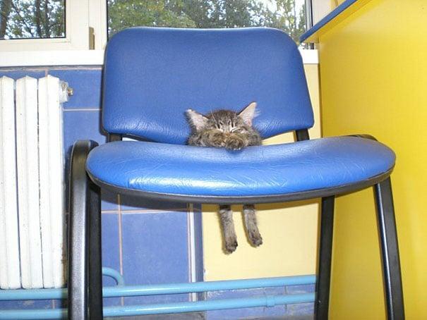 gatito atascado en una silla