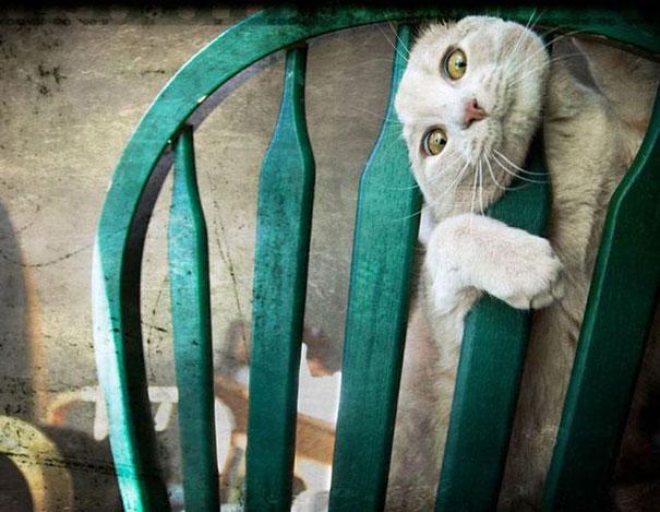 gato con la cabeza atorada en una silla