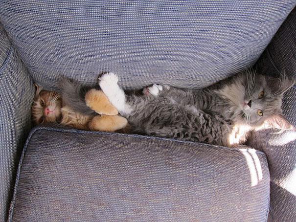dos gatos de diferente colores atrapados en un sillon