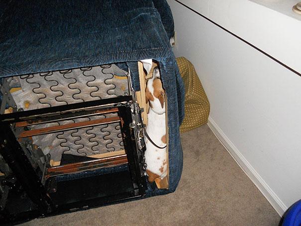 perro escondido adentro de un sillon