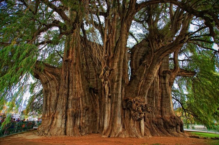 árbol de tule con figuras de leones en el tronco