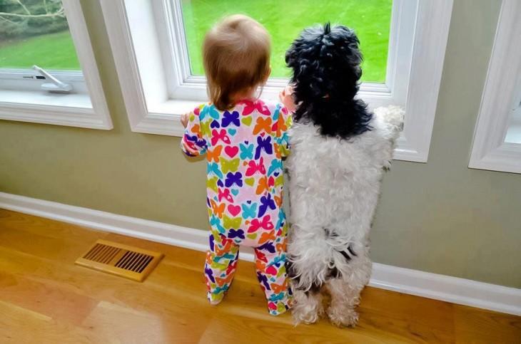 11 niño responzable de su perro